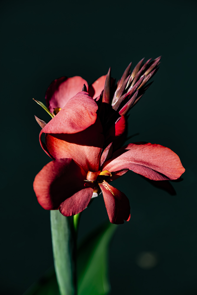 20200830 5DM37288 Freehold Flowers MWS C V1.jpg