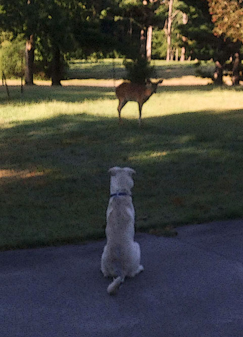 Loki-and-deer.jpg