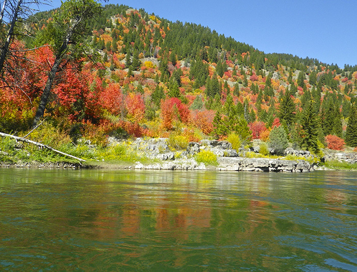 fall colors snake river.jpg