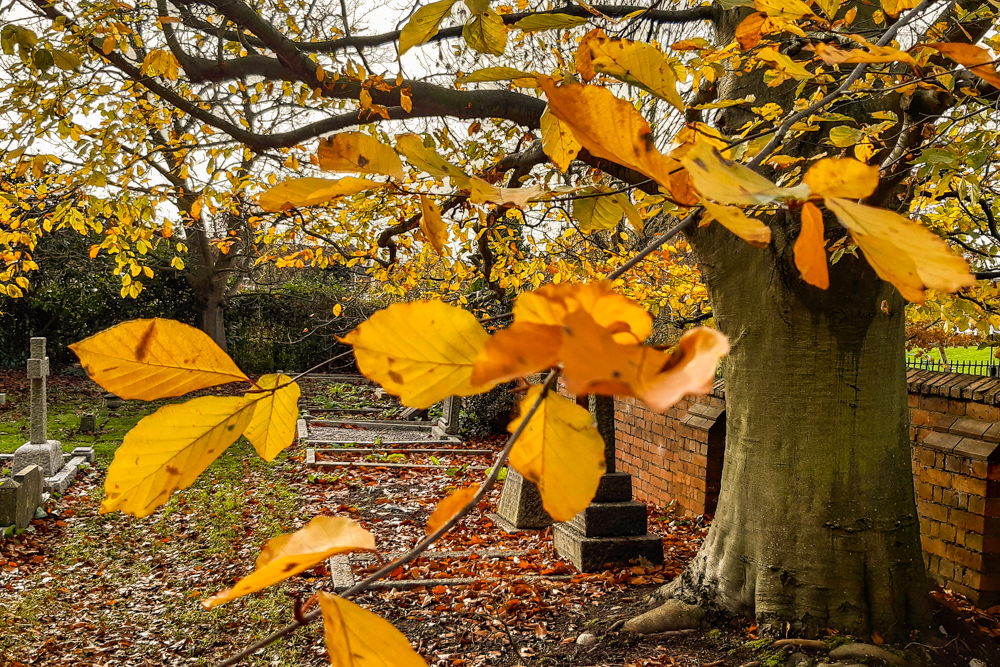 AutumnInChurchyard_A40_112300 (1 of 1).jpg
