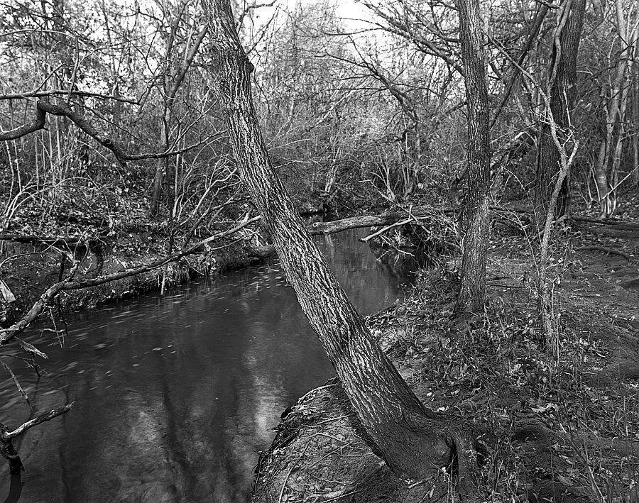 P&S tmax 100 in rodinal stand copy.jpg
