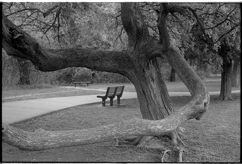 Park tree foma 200- microphen 50mm.jpg
