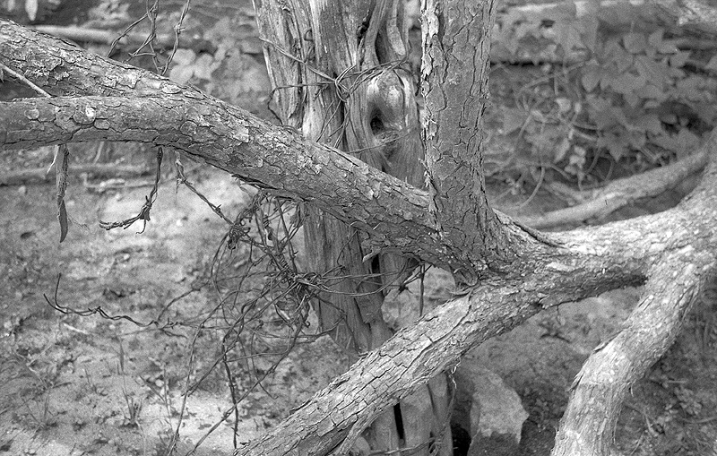 post and wire, Foma 200 in Rodinal semi stand.jpg