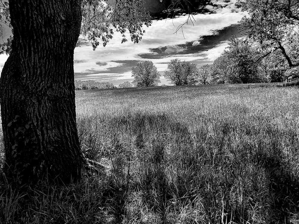 20200514 145820 Meadow along The Red Trail MWS BW V2.jpg