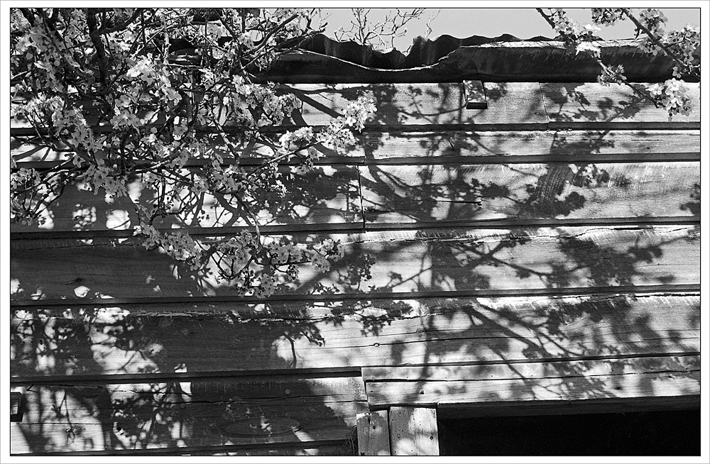 Spring and the Shed copy.jpg