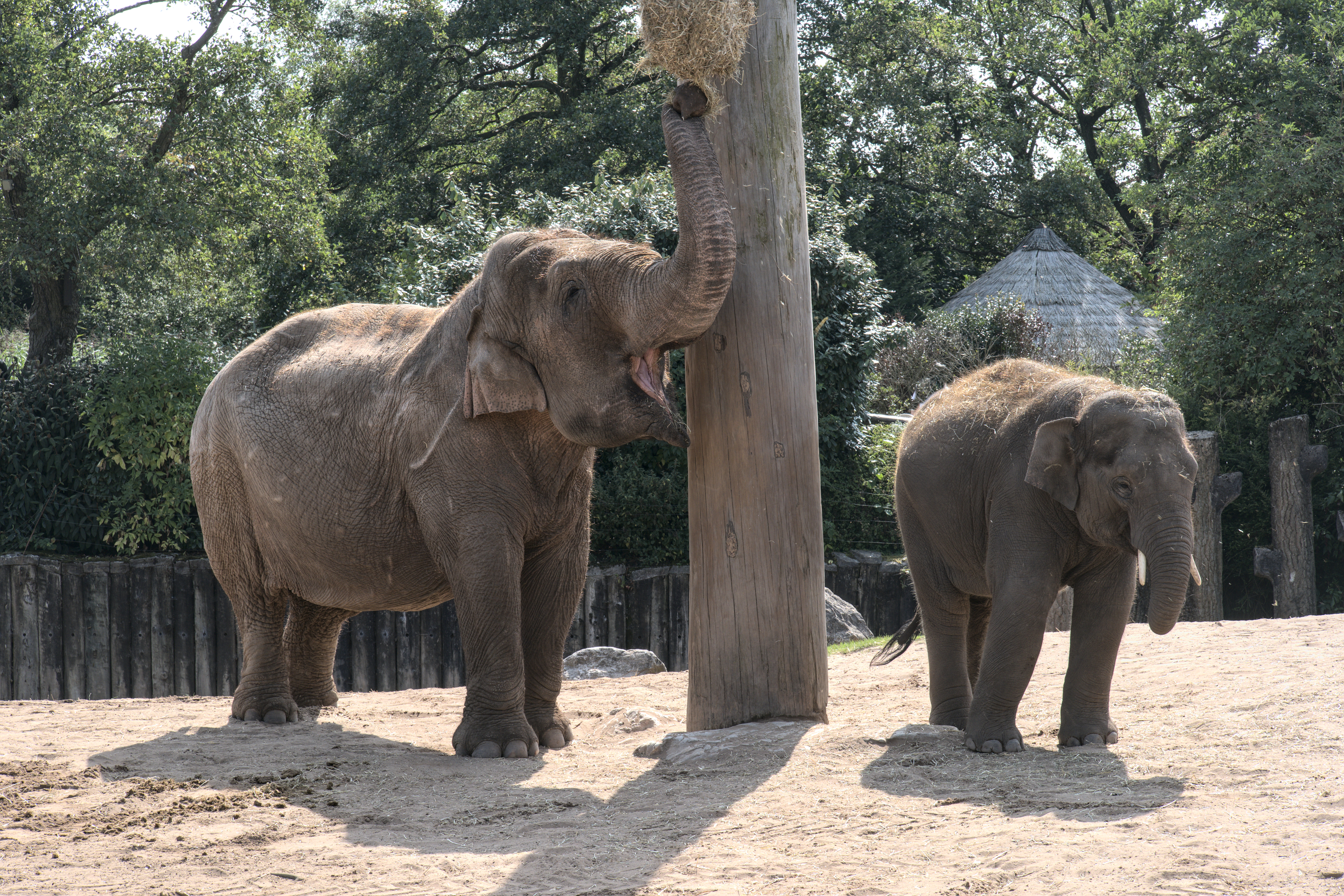 Elephants Chester Zoo 2 Low Res_1001272.jpg